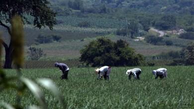 Los productores mexicanos están diversificando cada vez más sus negocios a mercados internacionales.