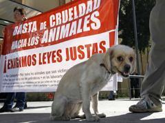Protección a las especies no humanas (Foto: Notimex/Archivo)