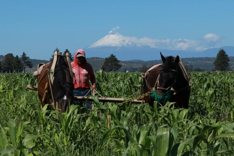 Agroempresarios y el gobierno mexicano, a través de la Secretaría de Economía (SE) acordaron rechazar la estacionalidad agrícola de la modernización del tratado comercial.