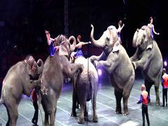 Animales en circos (Foto: Notimex)