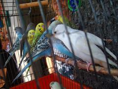 Especies animales en peligro de extinción