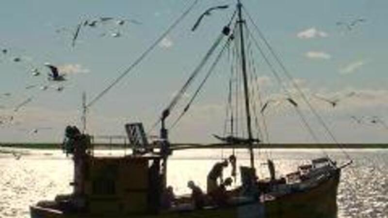 SCJN declara inconstitucional artículo de la Ley de Navegación