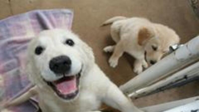 Las ganancias para el sector de servicios para mascotas en 2013 ascendieron a 1,000 millones de pesos
