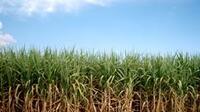 Apoyos para el sector agropecuario