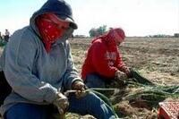 Beneficios para patrones y trabajadores del campo hasta 2012
