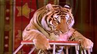 Empresarios de circos, contra la ley que prohíbe el uso de animales en estos espectáculos en la Ciudad de México (Foto: Notimex)