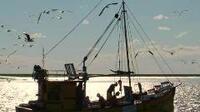 Pesca que protege a la fauna marina