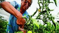 Importaciones agropecuarias sin estar en el padrón de importadores