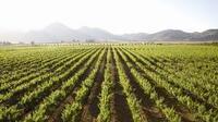 70% de los agroproductores en México están en quiebra: UNAM
