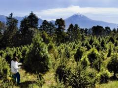 Consideren importar madera (foto: Ernesto Ramírez, revista: Expasión)