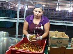 Más de 800,000 personas, en su mayoría mujeres, encontraron trabajo